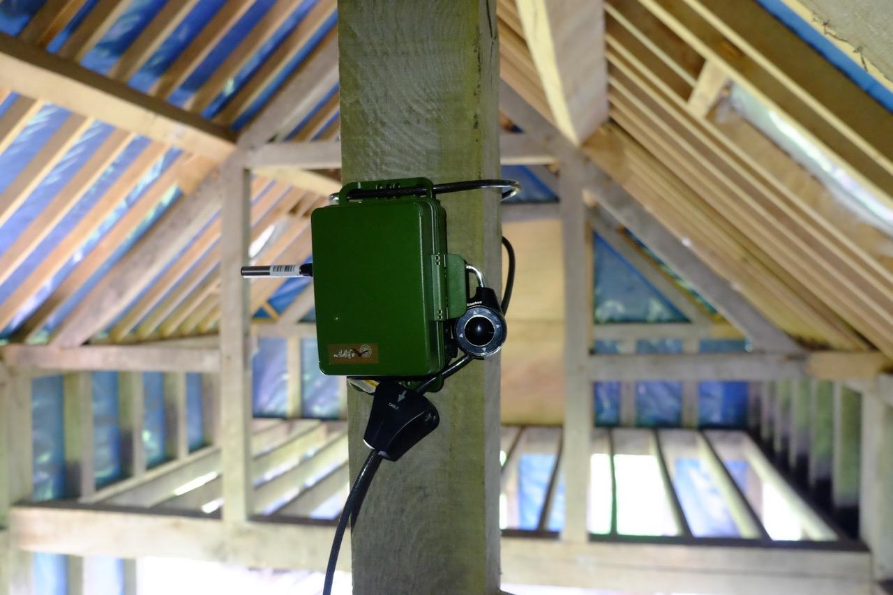 New Bat Detector