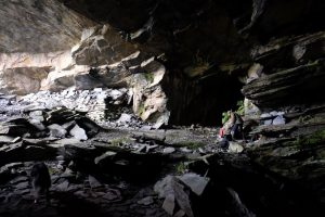 Hibernation counts in Wales